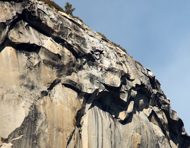 Topping out on The Nose. El Cap Tree looms above.